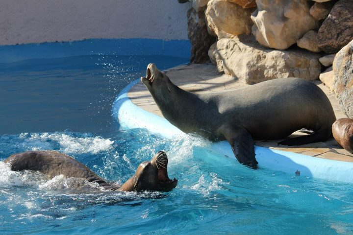 Marineland otaries