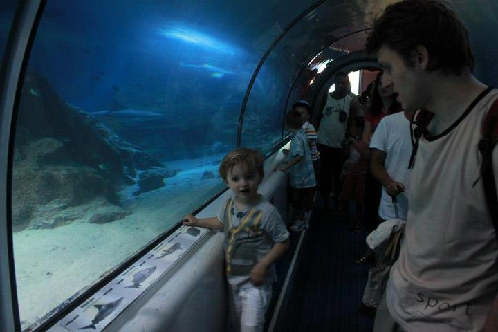 Marineland tunnel requins