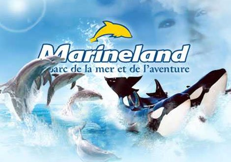Avis rencontre avec les otaries marineland