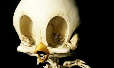 titi-squelette-01
