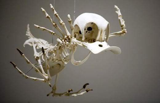 donald-squelette-01
