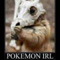 pokemon_irl en vrai