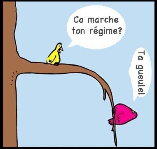 humour oiseaux